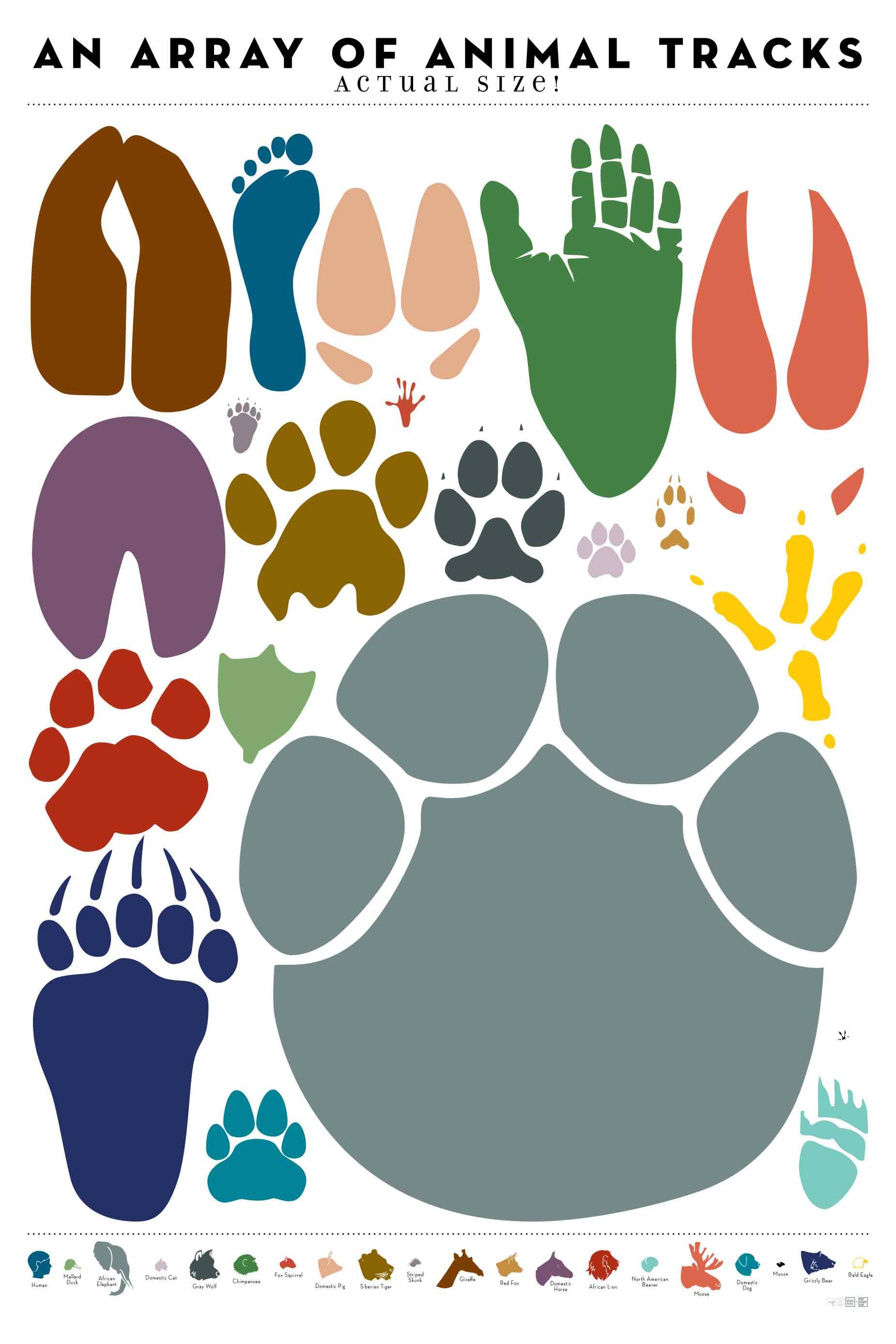 Impronte di animali for Immagini squali da stampare